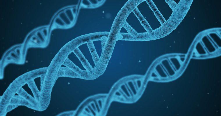 Rat gena: Projekat ljudskog genoma