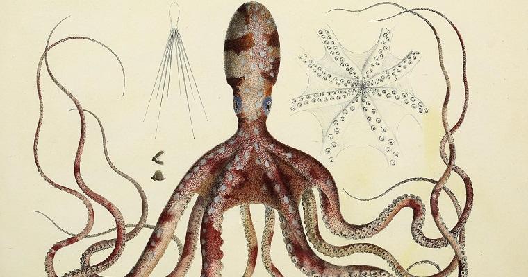 150.000 klasičnih ilustracija živog sveta dostupno za preuzimanje sa online Biblioteke nasleđa biodiverziteta